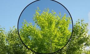 How-Circular-Polarizer-Filter-Works